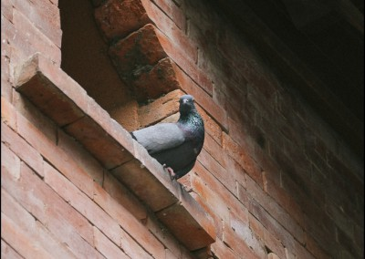 Watch Your Neck, Mr. Pigeon at Dwarika's Hotel's