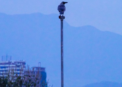A bird's Eye View of Kathmandu