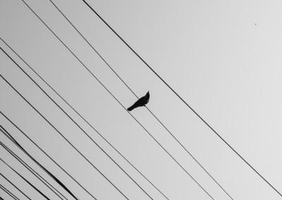 Birds in Kathmandu-1