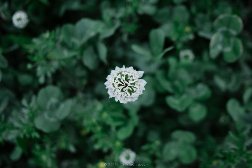 Flower Tianran