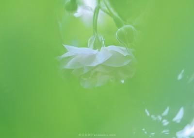 A Blanket of Green Fog