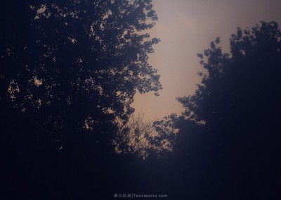The glowing trees-3