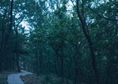 A Dusky Alleyway at Shandong University