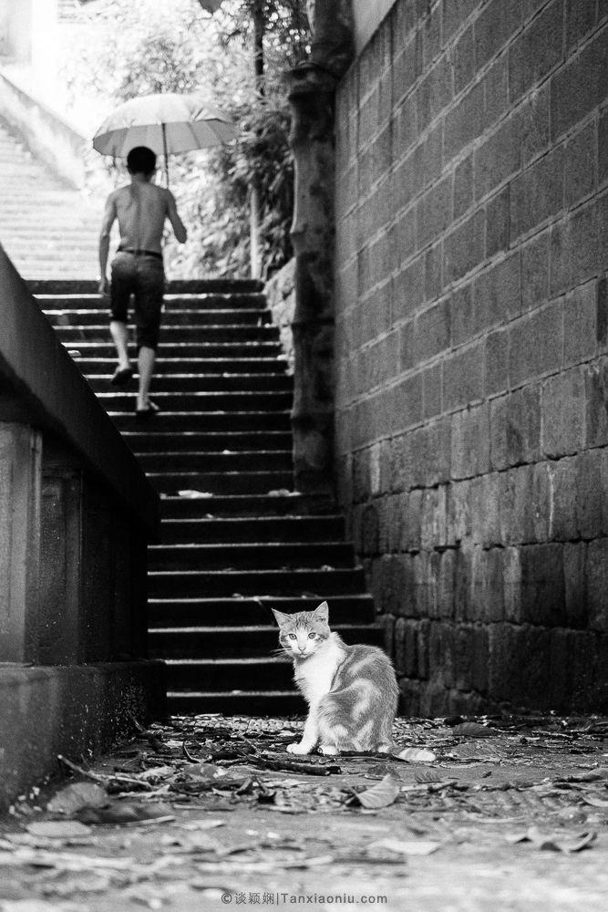 Cats-8