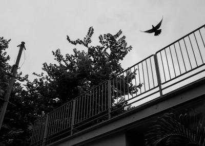 The Bird has flown?