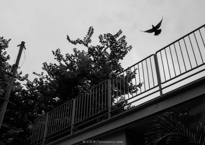 The bird has flown, Causeway Bay